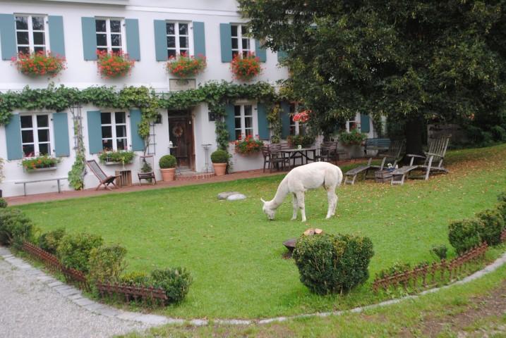 Besuch bei den Alpakas
